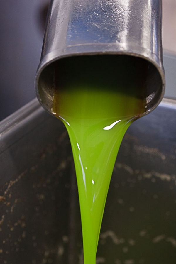 nostro olio